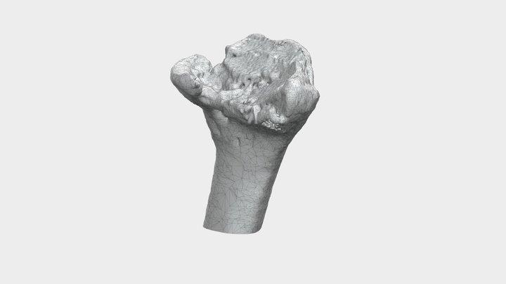 Fragment uszkodzonej kości promieniowej 3D Model