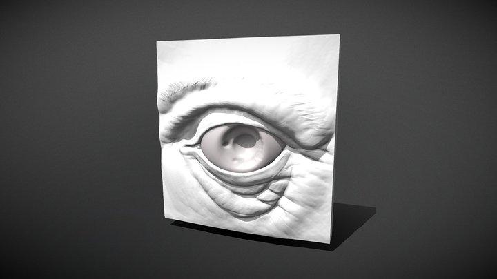Eye Model 3D Model