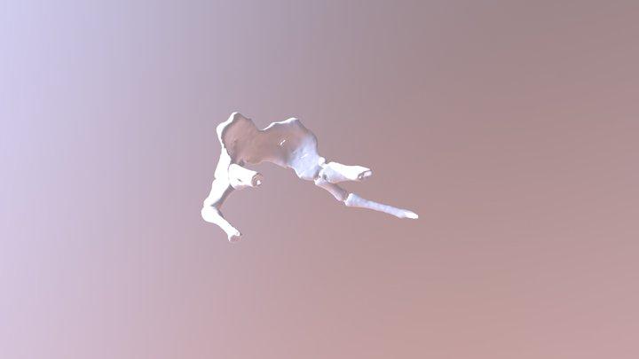 Tarsier Hyoid 3D Model