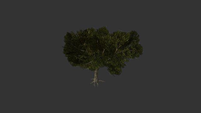 Modelo Árbol 1 (Con Ramas) 3D Model