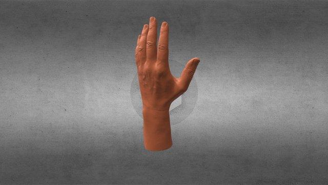 Hand_Norm_V_D00_decimated 5M 3D Model