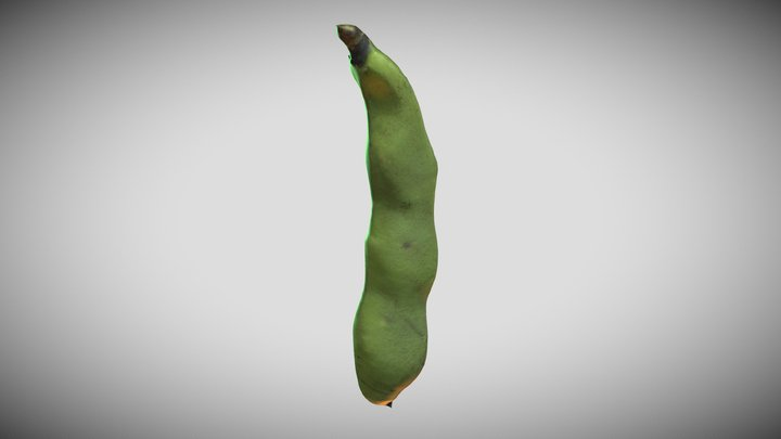 <!--Day18--> BroadBeans 3D Model
