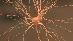 Neuron dendrite 3D Model