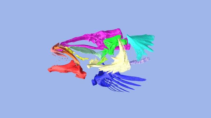 Galaxid Fish Skull 3D Model