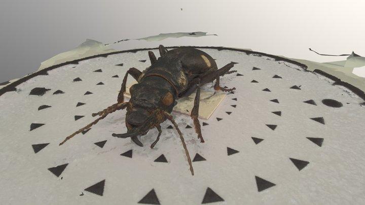 Tiger Beetle 3D Model