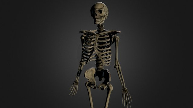 Third person action game - Skeleton level asset 3D Model