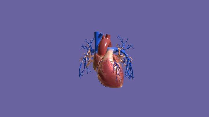 Corazón - Heart 3D Model