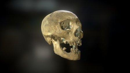 Deformed skull 3D Model