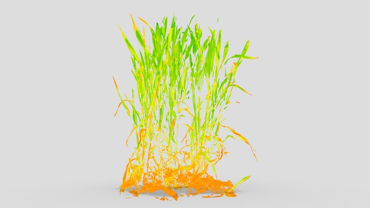 Wheat field | Health map | NDVI visualization 3D Model