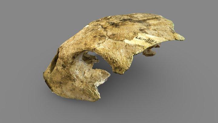 Fossil Holotype Sea Turtle 3D Model