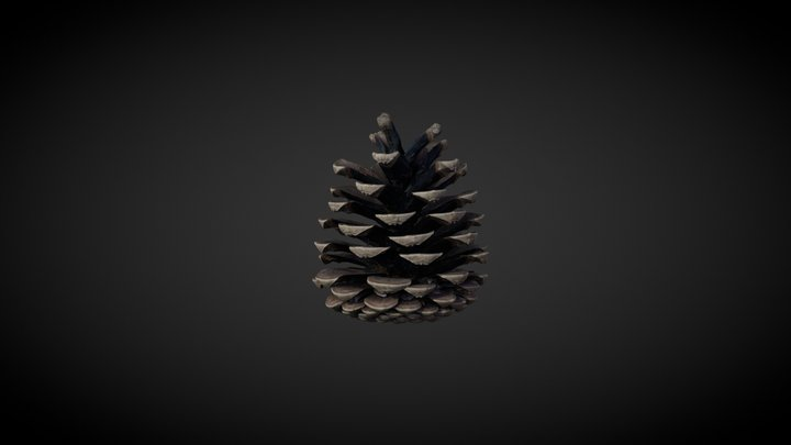 Pine, cone, textured 3D Model