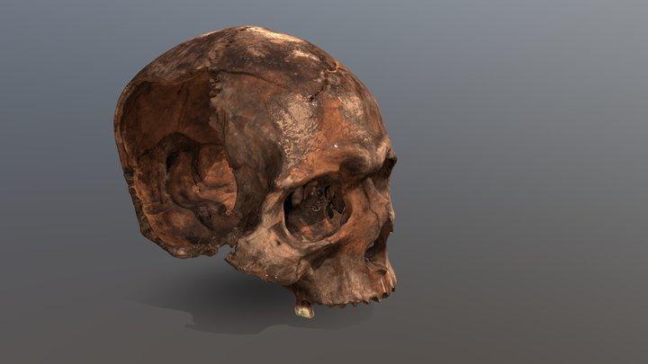 Human Cranium from Vindolanda 3D Model