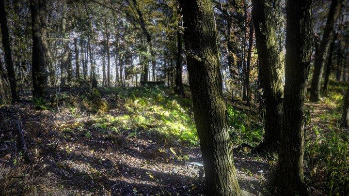 Forest environnement 3D Model