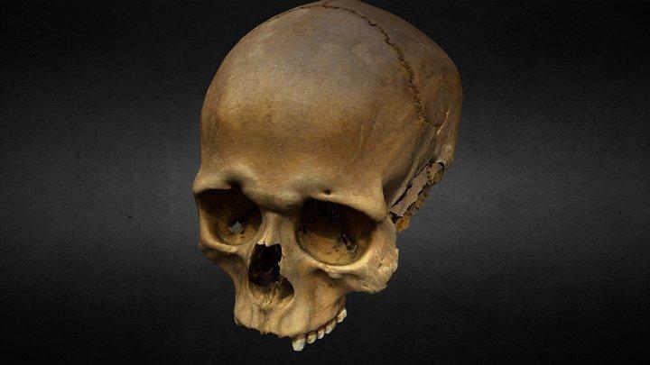 MUS15 Skull Decimated 3D Model