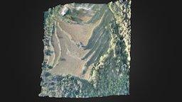 Forest regeneration 3D Model
