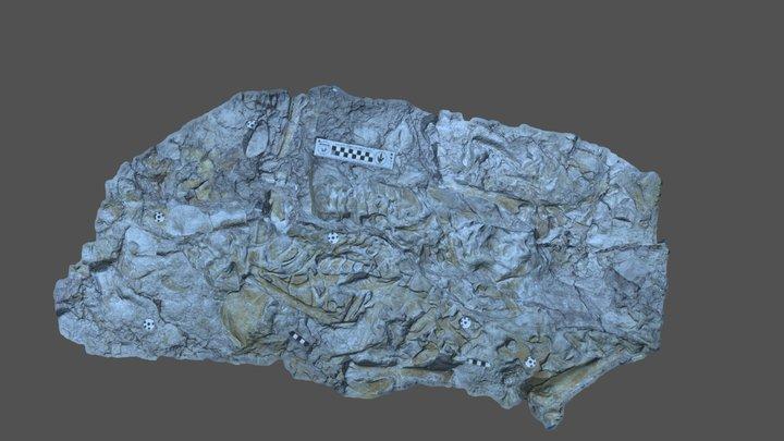 Utahraptor block north 3D Model