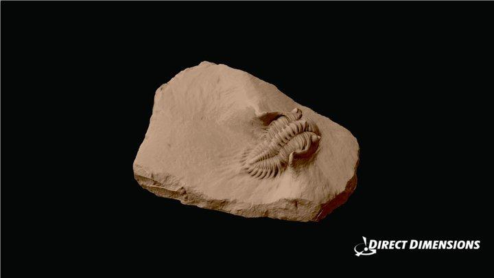 Trilobite Fossil 3D Model