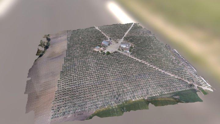 3D Olivar - Cordoba - Kumo Drones 3D Model