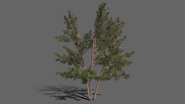 Common Hazel Tree Medium Poly 3D Model
