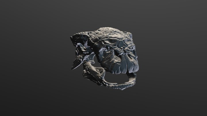 Euoplocephalus Skull 3D Model