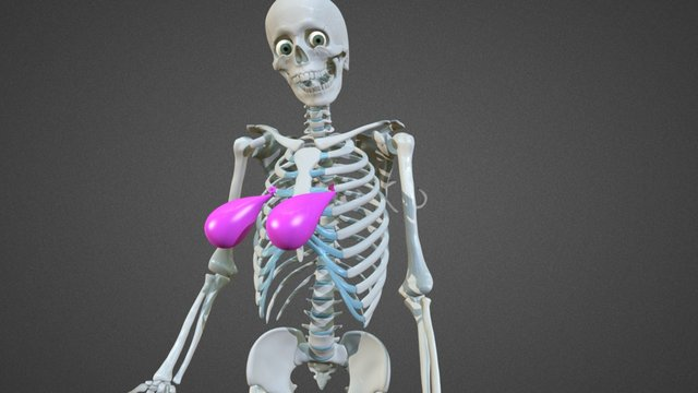 Skelly Water Balloon Boobs 3D Model