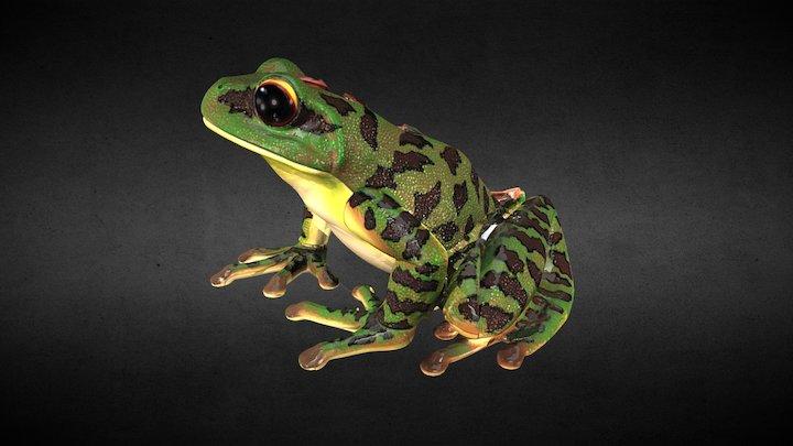 Anatomy Frog 3D Model