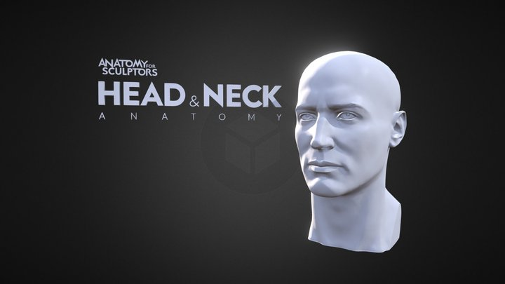 A4S Head & Neck Anatomy 3D Model