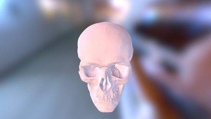 Skull_750k 3D Model