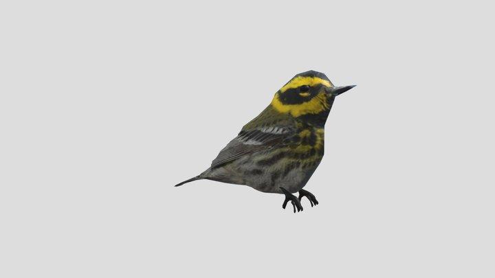 Bird - Yellow Desert Warbler 3D Model