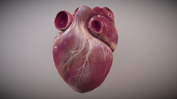 Human Heart [Animated] 3D Model