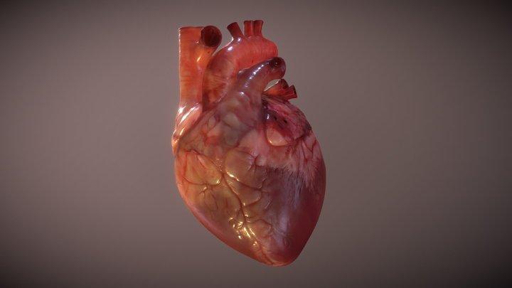 Human Heart 3D Model