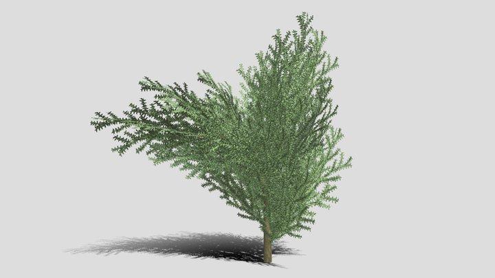 Boxwood Tree Version 10 3D Model