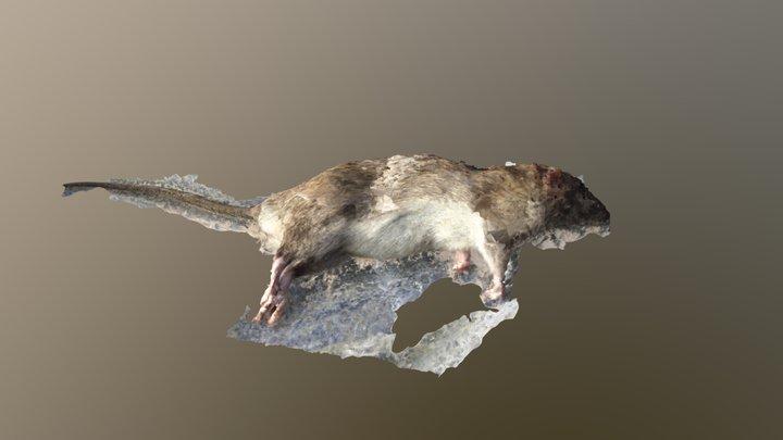 Norway Rat 2 - MeshRoom 3D Model