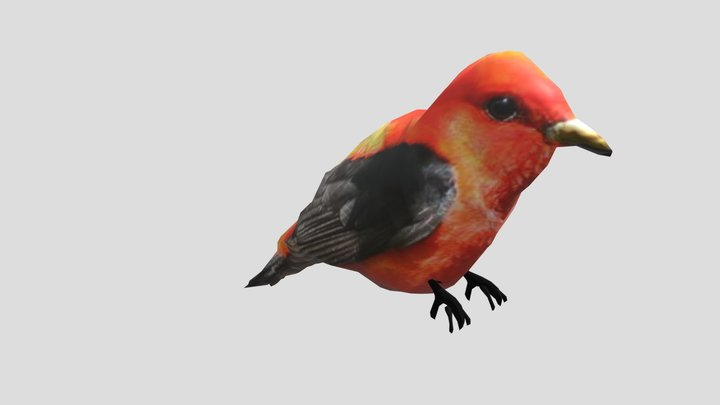 Bird - Scarlet Tanager 3D Model