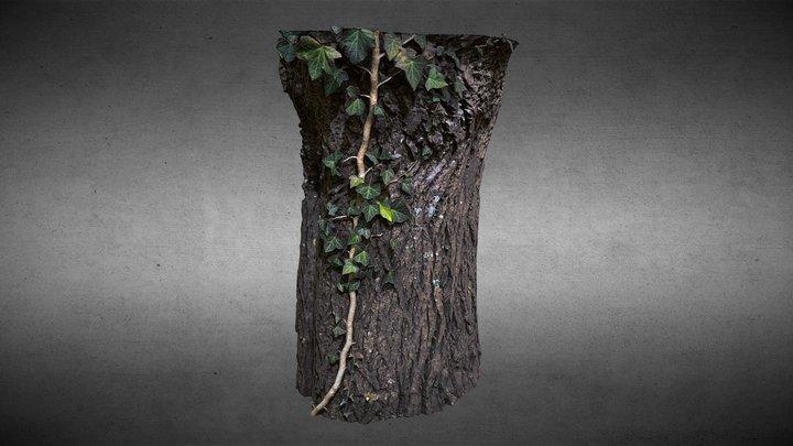 Bark Tree and Ivy Vigne 3D Model