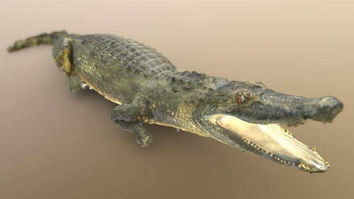Черный кайман | Black caiman 3D Model