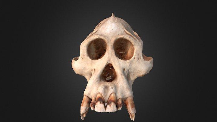 Gorilla skull 3D Model