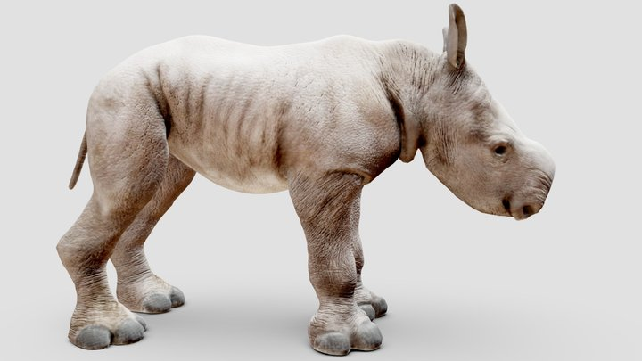 Baby White Rhino static pose. one of five. 3D Model
