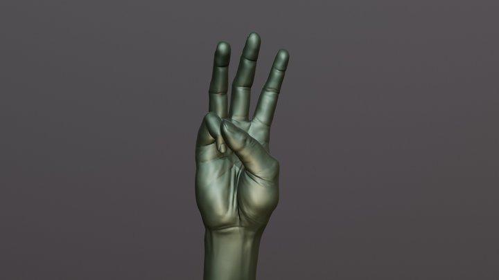 Male Hand Anatomy Study 3D Model