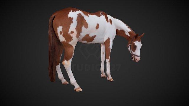 Horse - pose5 3D Model