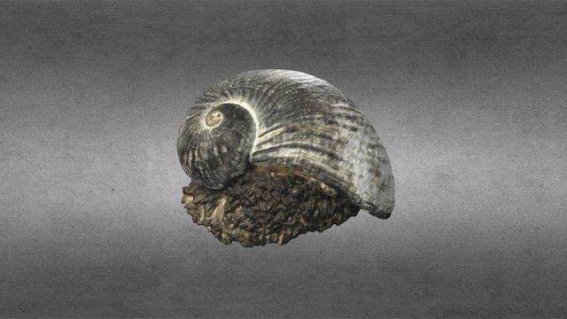 Scaly Gastropod | Gastropod Cennog 3D Model