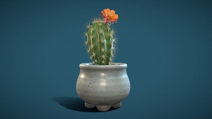 Cactus 02 3D Model