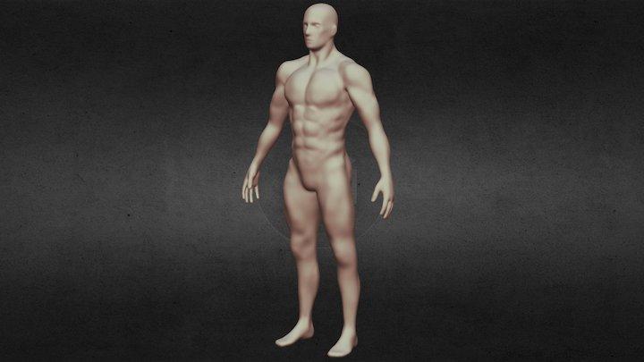 Músculos. 3D Model