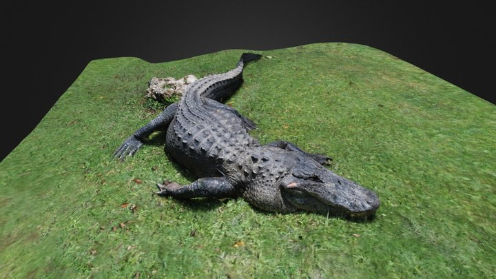Alligator reduced: 1,300K polys to 113K 3D Model
