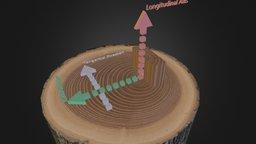 Principal Wood Directions 3D Model