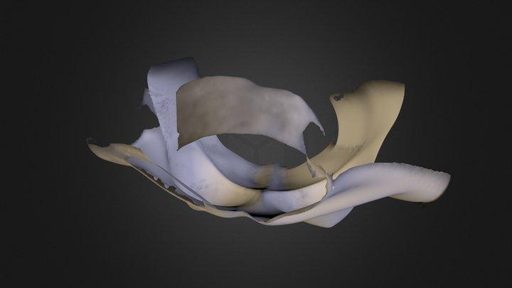 Anita TRUP.ply 3D Model