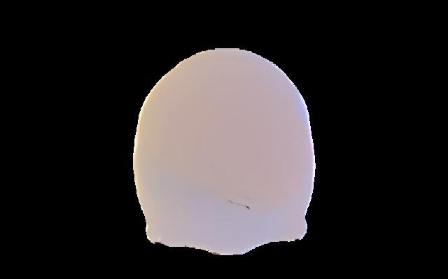 outer skull 3D Model