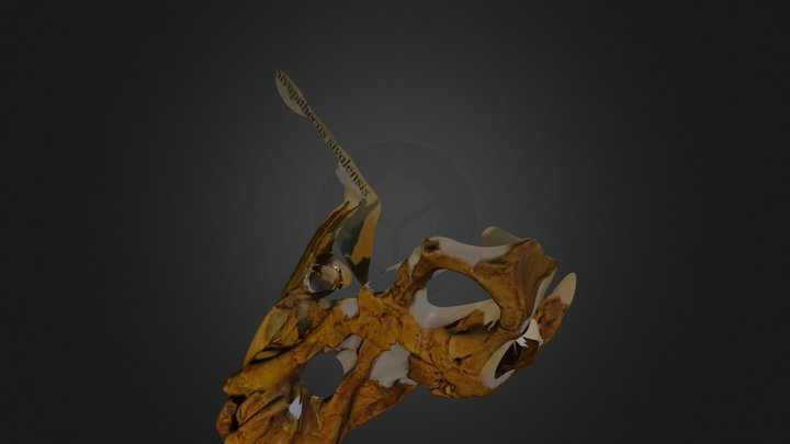 fossil_tex.zip 3D Model