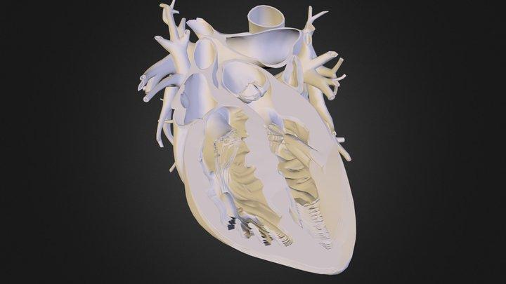 heart 00.obj 3D Model