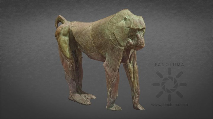 Rembrandt Bugatti - Baboon 3D Model